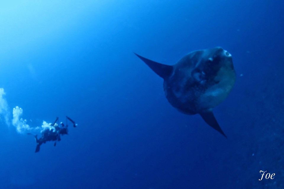Mola Mola Bali: The Famous Underwater Beast
