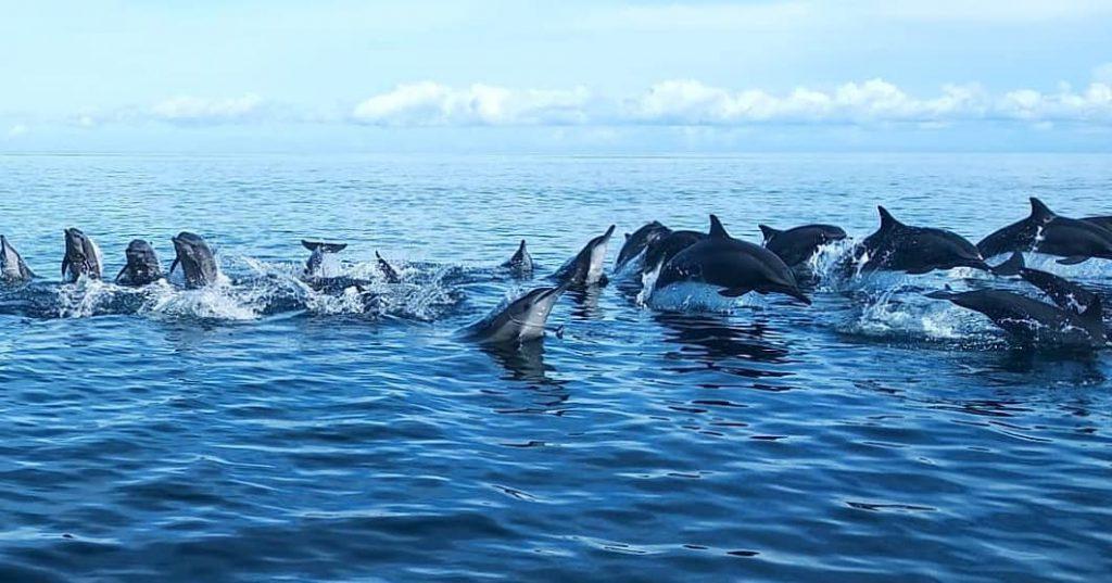 Lovina for Dolphins