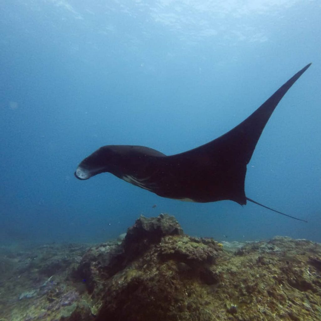 Why Bali Dive Sites are So Good